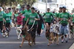 Thousands of Dogs and Owners March Against Animal Cruelty