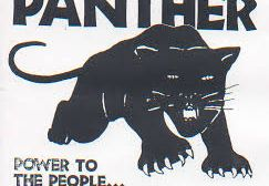 Panther on the loose in Almeria