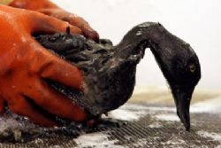Spain court clears captain & crew in Prestige oil spill