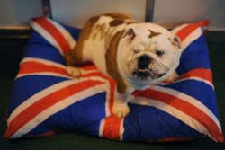 Pets 'can influence decision to move abroad'