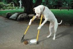 Spain Employs First Dog Poo Detective