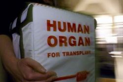 Spain Consistently Leads Transplant Records